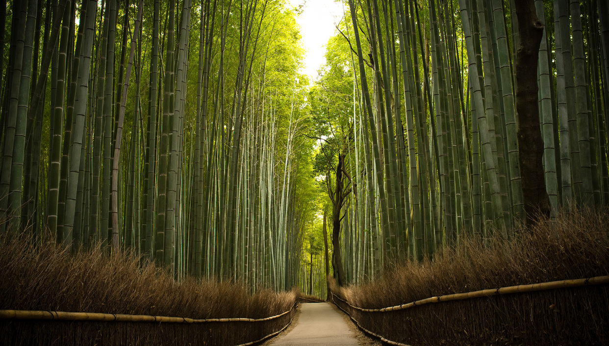 moso-bamboo-trees-forest